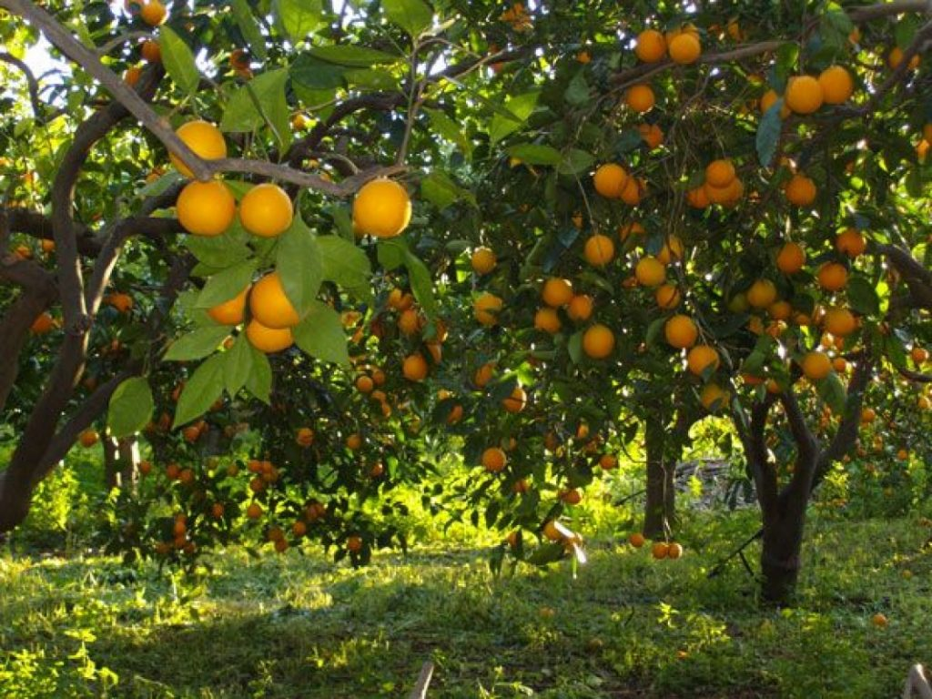 تنسيق الحدائق العامة وتنسيق حدائق الفلل